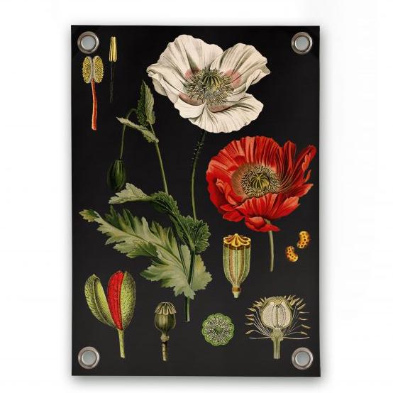 Botanical garden poster villa madelief