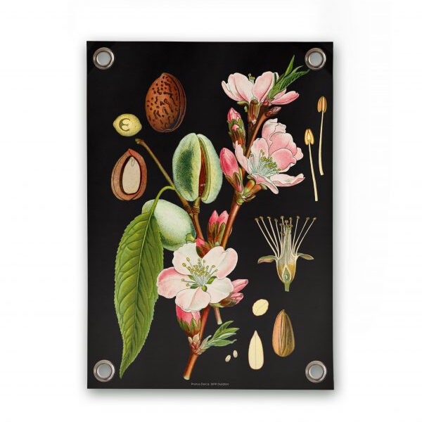 Botanical outdoor poster almond villa madelief